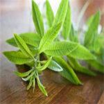 خواص شگفت انگیز گیاه به لیمو و چای به لیمو برای سلامتی